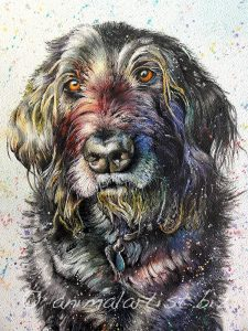 Colourful portrait of black dog