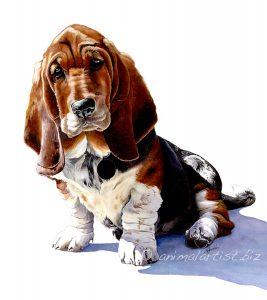 detailed watercolour basset puppy