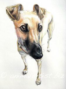 detailed lurcher portrait