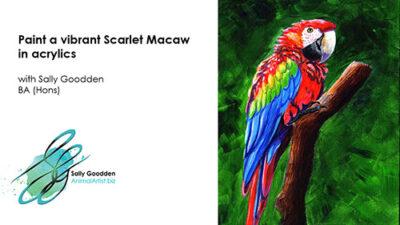 macaw_Intro_web