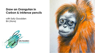 Orangutan_Intro_web